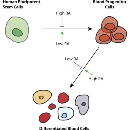 Current Stem Cell Research TherapyBenthamScience