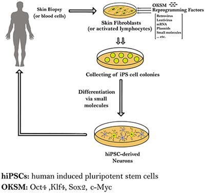 Research paper about stem cell therapy impact factor